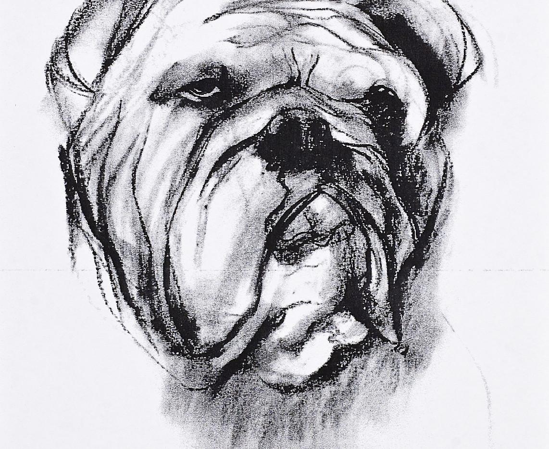 bulldog1998.jpg