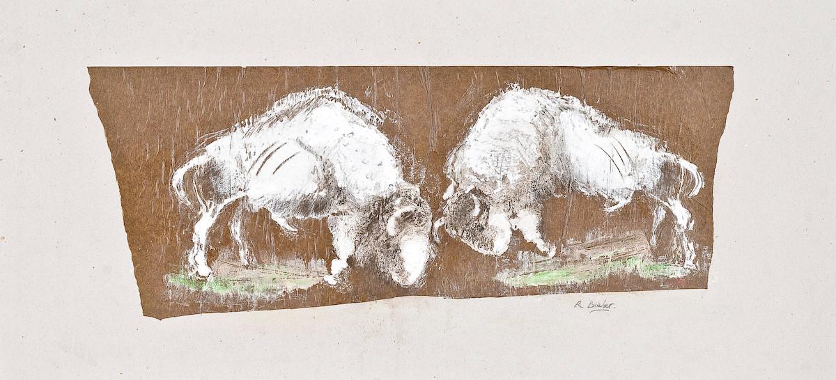 bison fighting 2008.jpg