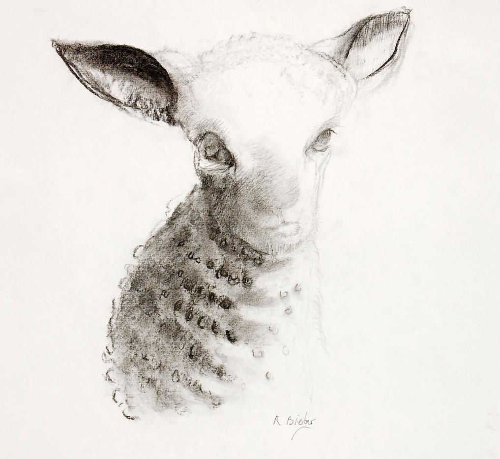 lamb 2005