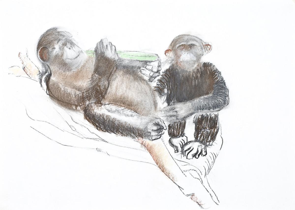 chimps 2007.jpg