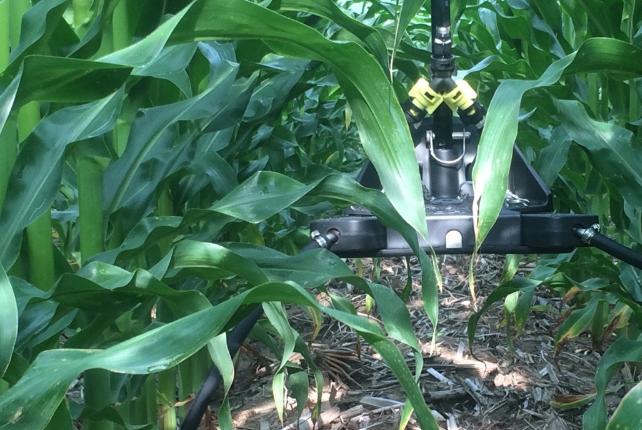Lisa Prassack sensor corn_edited
