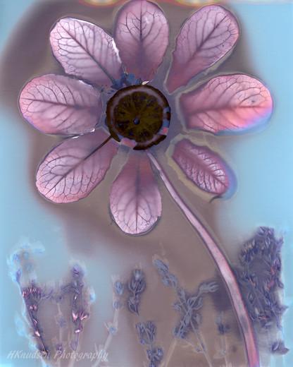lumen using photographic paper