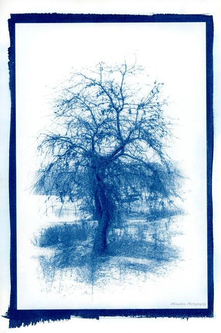 cyanotype on fine art paper
