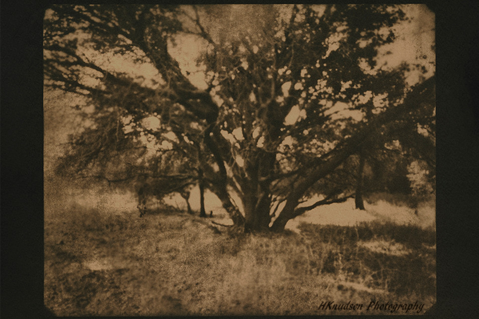 cyanotype toned in coffee and tea- image taken with a pinhole camera