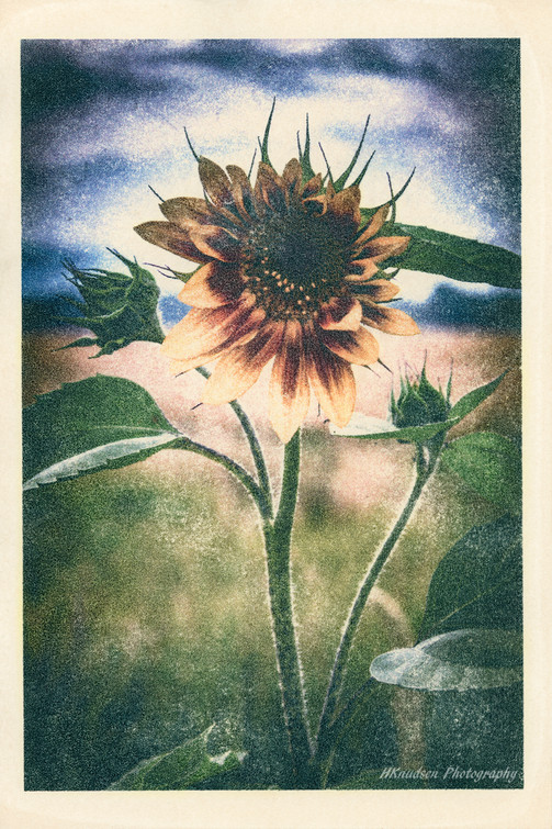 image transfer on fine art paper