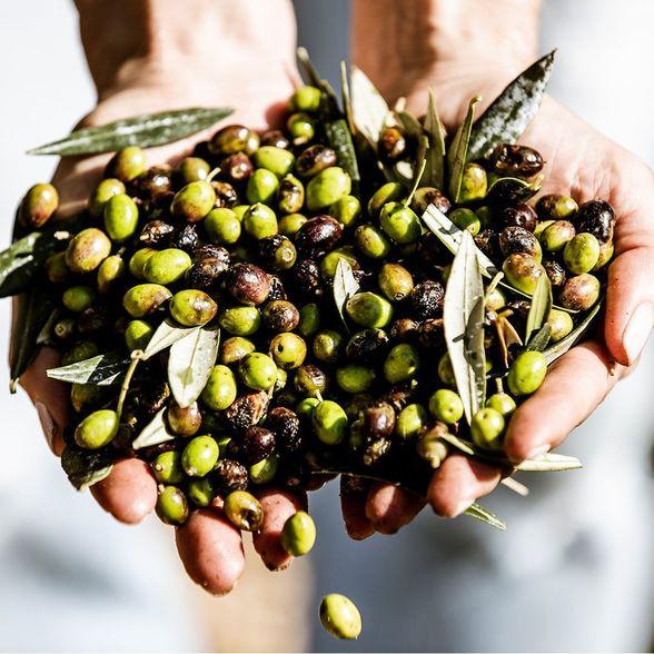 Bel Lavoro Olive Orchard In Montecito, Calif. Celebrates National Olive Day, June 1, 2020