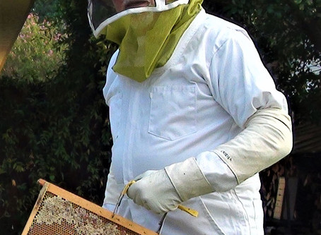 Benefits of Bees