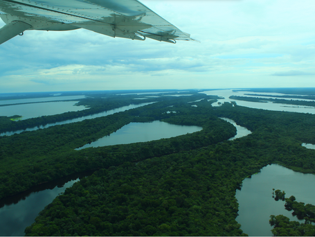 Futuro da Amazônia é impactado pelo setor privado