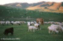 Mongolia Nomadicare