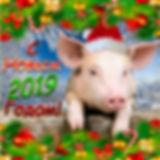 2019 свинья.jpg