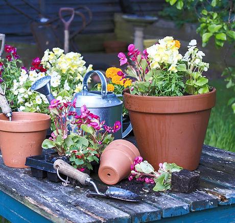 Pottedflowers-GettyImages-171589906-5921936c3df78cf5fa1307fe%20(1)_edited.jpg