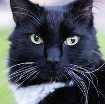 Fran Mackintosh Pet Photographer Frankie Cat Photgraphy