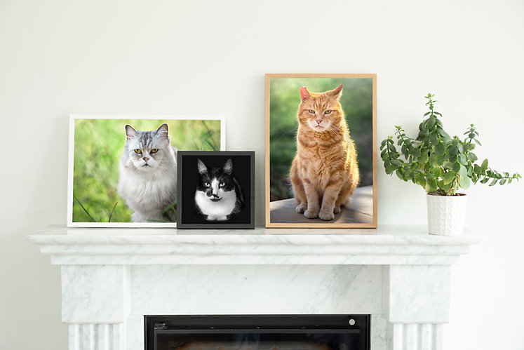 WallDecor24 cats.jpg