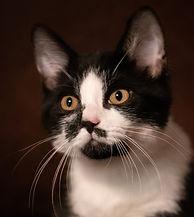 Fran Mackintosh Pet Photographer Bear Cat Photgraphy