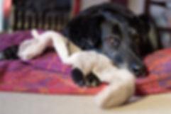Fran Mackintosh Pet Photography Home Session