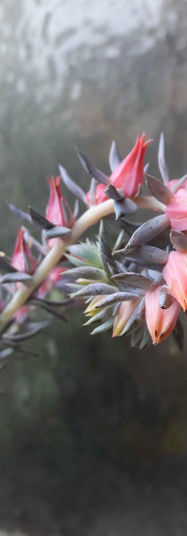 hampe florale