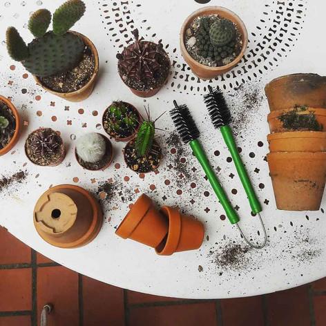 pince à cactus
