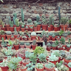 étagère-plantes-serre.jpg