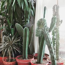 The Cactus Corner chez nous