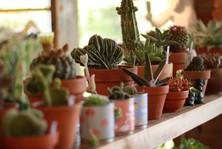 Nach The Cactus Corner