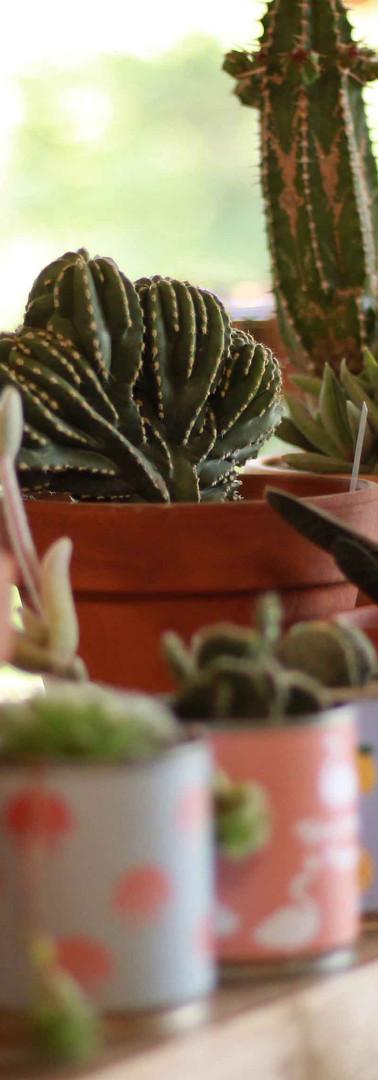 stand cactus corner