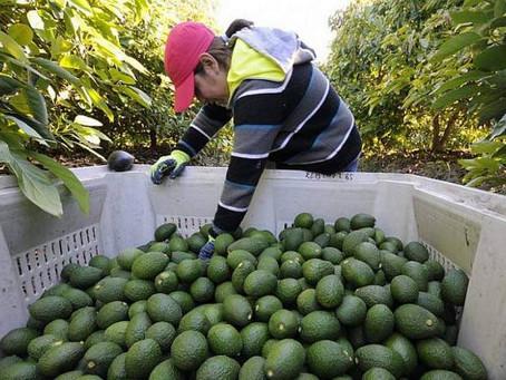Exportaciones Agropecuarias Igualan a la Petroleras