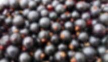 currants-3494371_1920.jpg
