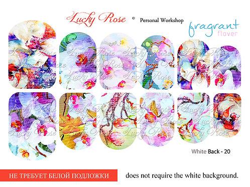 Series White Back №20