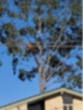 Men Up Tree.jpg