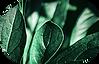 nappi_icon_vihrea_kuva_green.png