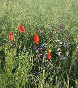 Brockadale Meadow