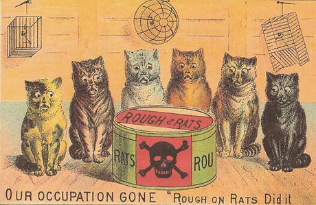 Scan%20Rough%20on%20Rats%202_edited.jpg