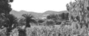 Domaine Maubernard Cette propriété, d'une dizaine d'hectares de sol pierreux, s'étend en pente douce vers le golfe des Lecques. Vente de vin rouge et rosé Appellation Bandol Controlée. Vente en ligne. Vente à la cave.
