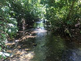 river alajuela costa rica www.miamiandbr