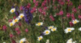 IMG_6723_Moni_edited.jpg