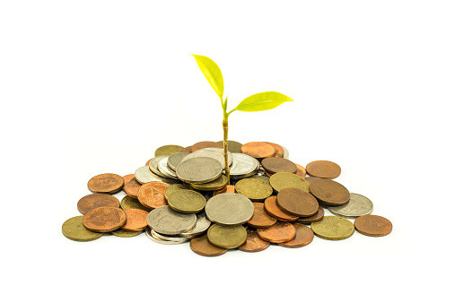 Plant Growing out of Coins.jpg