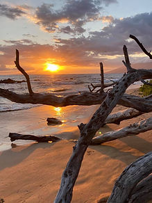 Driftwood Keawakapu Beach.jpg