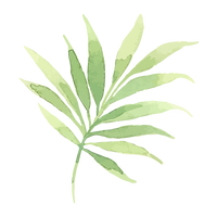 Tropical Leaves 2_edited.png