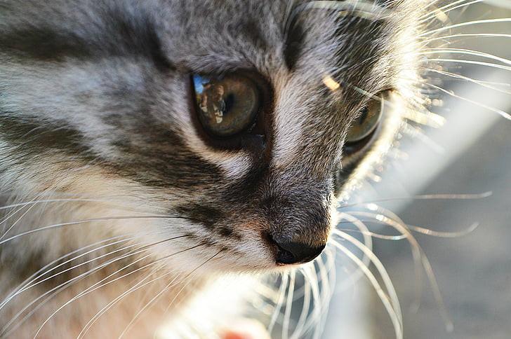 cat-kitten-animals-person-preview.jpg