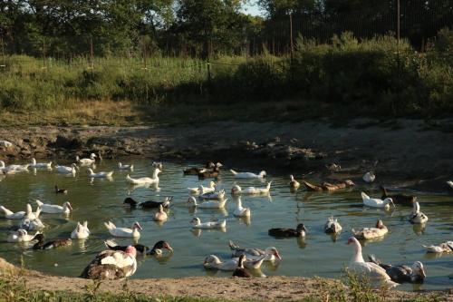 Duck pond web