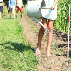 Watering the strawberries