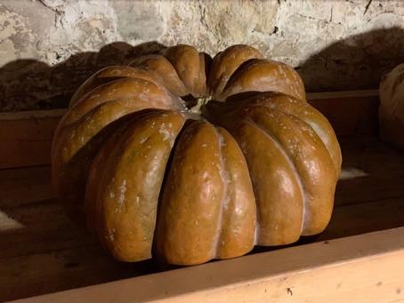 That pumpkin needs using