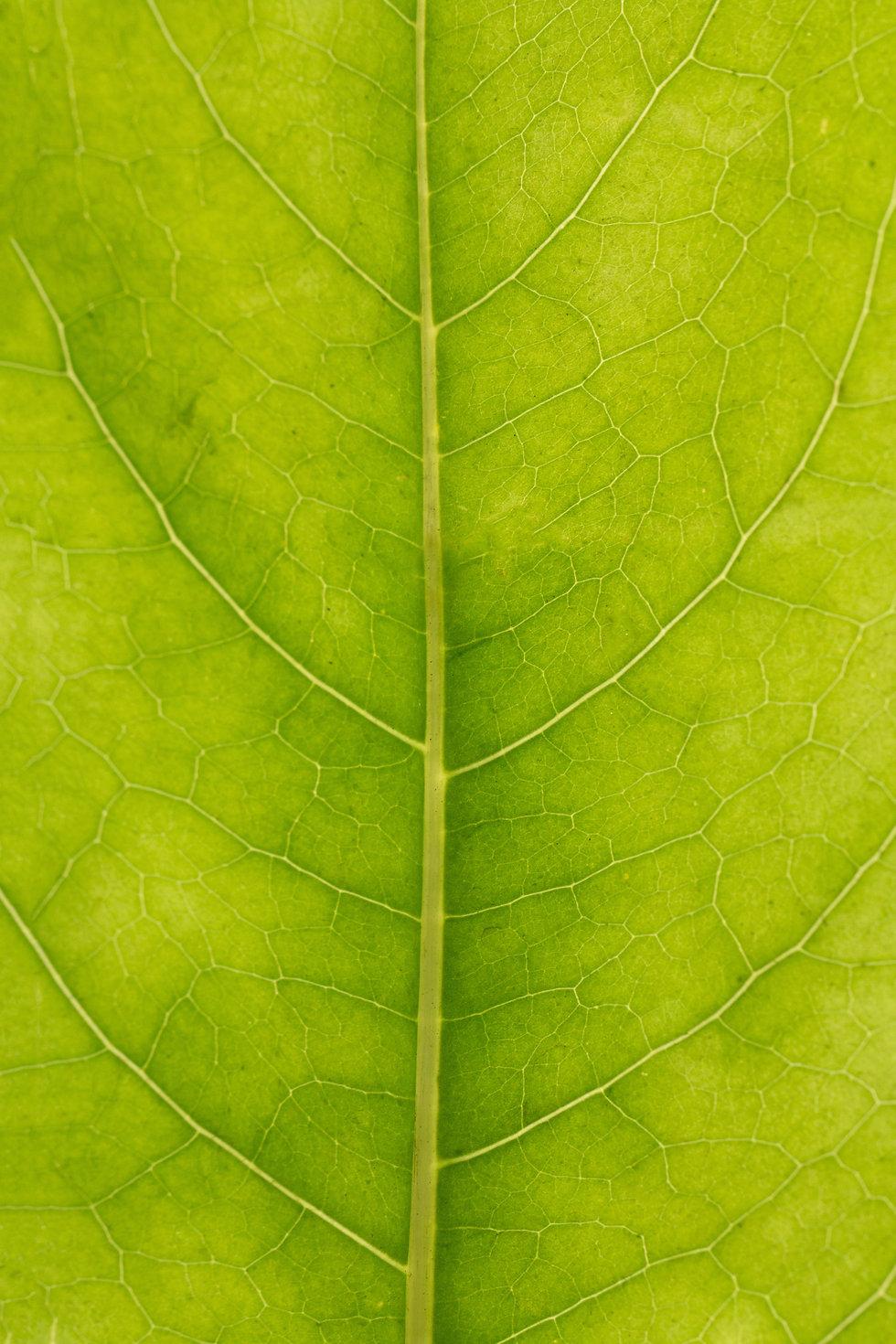 green-leaf-3531528.jpg