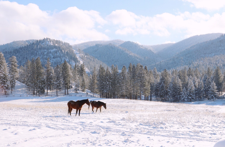 Horses in the Winter Pasture