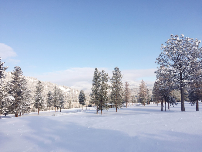 Fresh Snowfall in the Winter