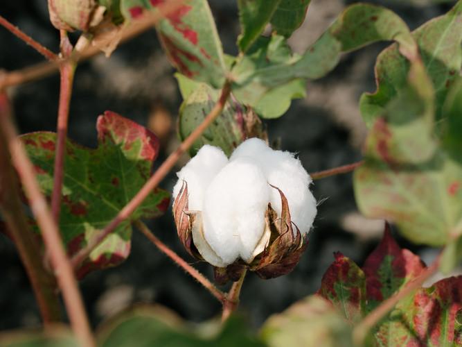 Mungo_Organic_Cotton-06853.jpg