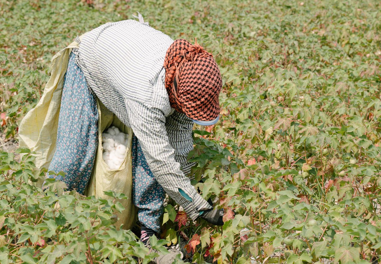 Mungo_Organic_Cotton-06850.jpg
