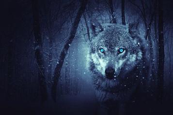"""""""Nel bosco"""" racconto di Fiorenza Pistocchi per Il Vizio di scrivere - Emozioni in 30 righe"""