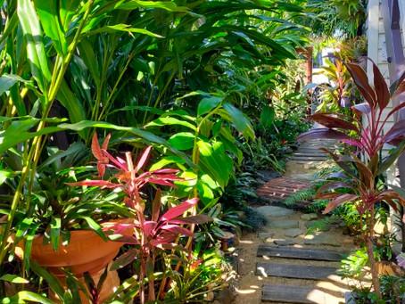 Come Visit My Garden