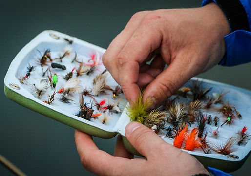 Harry Daley_Fly Collection.jpg